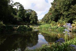Hydrangeas beside Mallard Pond