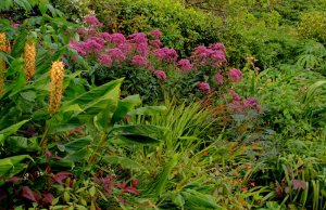 Trelissick - Herbaceous Border